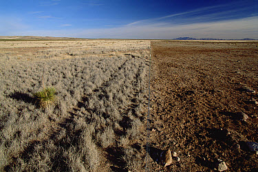 Fence separating an over-grazed pasture from native Chihuahuan Desert grassland, near Hatch, New Mexico  -  Gerry Ellis