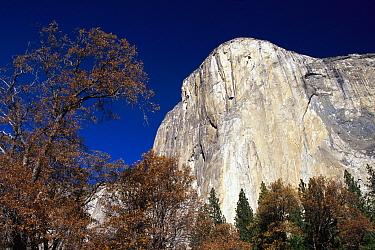 Late light on face of monolith of El Capitan, Yosemite National Park, California  -  Gerry Ellis