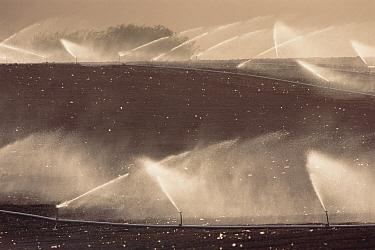 Irrigation sprinklers on farmland, Castroville, California  -  Gerry Ellis