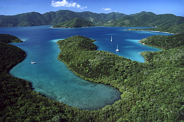 Hurricane Bay, Virgin Islands National Park, Saint John Island, Virgin Islands, Caribbean