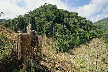 Deforested hillside of wet montane rainforest near Los Cedros Biological Reserve, Choco Phytogeographic region, northwest Ecuador  -  Gerry Ellis