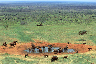 African Elephant (Loxodonta africana) herd at watering hole, Tsavo National Park, Kenya  -  Gerry Ellis