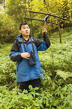 Giant Panda (Ailuropoda melanoleuca) researcher Liu Bing radio tracking Xiang Xiang, the first captive raised panda released into the wild, Wolong Nature Reserve, endangered, China  -  Katherine Feng
