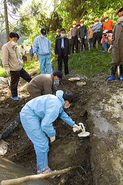 Giant Panda (Ailuropoda melanoleuca) recovery effort, veterinarian, Wang Chengdog, using hand-held reader to locate Mao Mao's body after the May 12, 2008 earthquake and landslides, CCRCGP, Wolong, Chi...  -  Katherine Feng