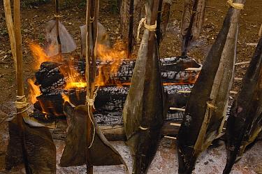 Smoke-drying fish, Ampasendava Village, northeast Madagascar  -  Pete Oxford