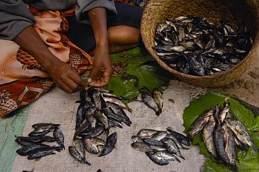 Mahafaly woman selling fish at market, southwest Madagascar  -  Pete Oxford