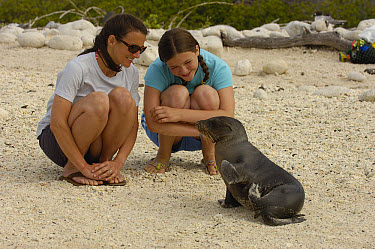 Galapagos Sea Lion (Zalophus wollebaeki) pup interacting with tourists, Gardner Bay, Espanola Island, Galapagos Islands, Ecuador  -  Pete Oxford