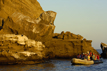 Blue-footed Booby (Sula nebouxii) pair on cliff observed by tourists in boat, Galapagos Islands, Ecuador  -  Pete Oxford