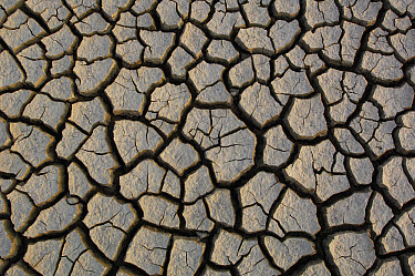 Cracked mud on the salt flats of the Little Rann of Kutch, Gujarat, India  -  Pete Oxford