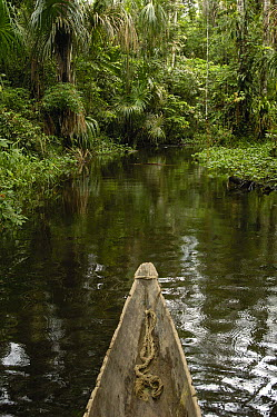 Dugout canoe in blackwater stream, Yasuni National Park Biosphere Reserve, Amazon rainforest, Ecuador  -  Pete Oxford