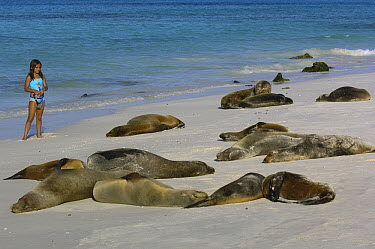 Galapagos Sea Lion (Zalophus wollebaeki) group on beach with tourist, Espanola (Hood) Island, Galapagos Islands, Ecuador  -  Pete Oxford