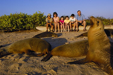 Galapagos Sea Lion (Zalophus wollebaeki) group on beach with tourists, Espanola (Hood) Island, Galapagos Islands, Ecuador  -  Pete Oxford