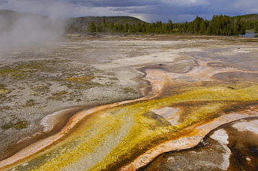 Bacterial mats, Yellowstone National Park, Wyoming  -  Pete Oxford