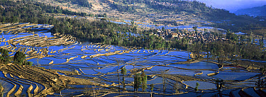 Mushroom houses and terraces, Hani ethnic minority group, Honghe Prefecture, Yunnan Province, China  -  Pete Oxford