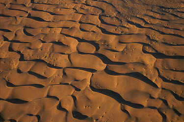 Aerial view of sand dunes, near Sossusvlei, Namibia  -  Pete Oxford
