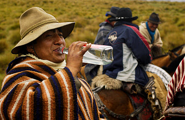 Chagra cowboys in paramo habitat at a hacienda during the annual cattle round-up, drinking strong cane alcohol during the ride, Andes Mountains, Ecuador  -  Pete Oxford