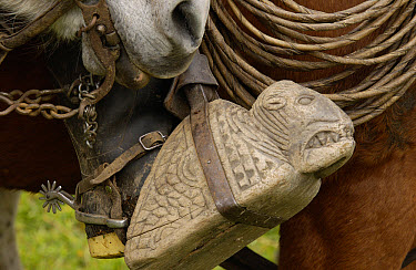 Close up detail of a chagra or cowboy's decoratively carved wooden stirrup, Andes Mountains, Ecuador  -  Pete Oxford