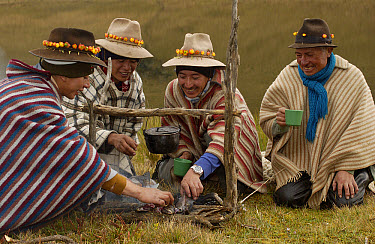Chagra cowboys with Mountain roses in the bands of their hats cooking trout over a fire at a hacienda during the annual overnight cattle round-up, Andes Mountains, Ecuador  -  Pete Oxford