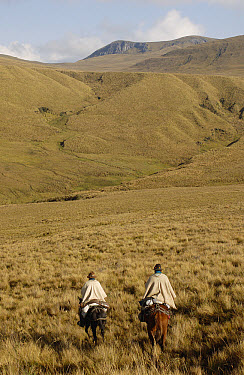 Two Chagra cowboys riding across open Paramo grassland at a hacienda during the annual overnight cattle round-up, Andes Mountains, Ecuador  -  Pete Oxford