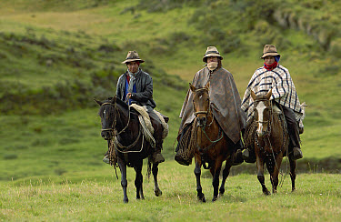 Three Chagra cowboys riding their horses at a hacienda during the annual overnight cattle round-up, Andes Mountains, Ecuador  -  Pete Oxford