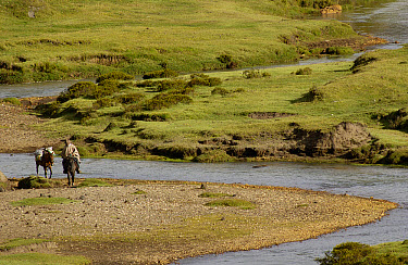 Chagra cowboy crossing a stream on horseback at a hacienda during the annual overnight cattle round-up, Andes Mountains, Ecuador  -  Pete Oxford