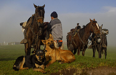 Chagra cowboys saddling up their Domestic Horse (Equus caballus) group at a hacienda during the annual overnight cattle round-up, Andes Mountains, Ecuador  -  Pete Oxford