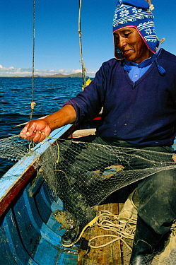 Lake Titicaca Frog (Telmatobius culeus) the world's largest aquatic frog, caught in a net by a researcher at Lake Titicaca at13,000 feet elevation, Andes Mountains, Bolivia and Peru, critically endang...