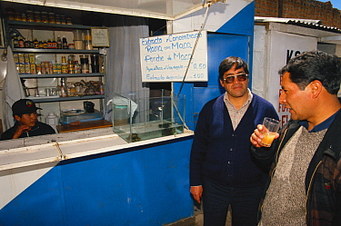 Customers at a booth drinking frog juice, a blended concoction including Lake Titicaca Frog (Telmatobius culeus) maca, honey and water which is considered an aphrodisiac, Andes Mountains, Bolivia and...