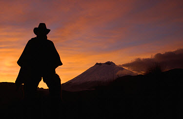 Chagra cowboy silhouetted against the sky at sunset with Cotopaxi Volcano in the background at a hacienda in the Andes Mountains during the annual cattle round-up, Ecuador  -  Pete Oxford
