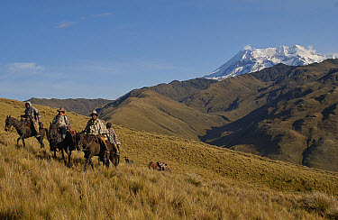 Chagras or cowboys on an overnight ride at a hacienda during the annual cattle round-up, with Mt Antisana in the background, Ecuador  -  Pete Oxford