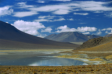 High Andean lake and altiplano, southwestern, Bolivia  -  Pete Oxford