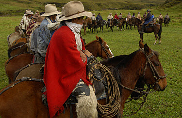 Chagra cowboys lined up at a hacienda in the Andes Mountains for the annual overnight cattle round-up, Ecuador  -  Pete Oxford