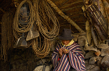 Chagra cowboy smoking among lassos, saddles and tack at a hacienda in the Andes Mountains during the annual cattle round-up, Ecuador  -  Pete Oxford