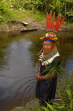 Cofan Indian who first observed Harpy Eagle (Harpia harpyja) nest and whose land the nest is on, Cuyabeno Reserve, Amazon rainforest, Ecuador  -  Pete Oxford