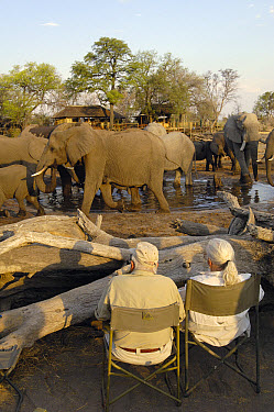 African Elephant (Loxodonta africana) herd at waterhole being watched by tourists, vulnerable, Africa  -  Pete Oxford