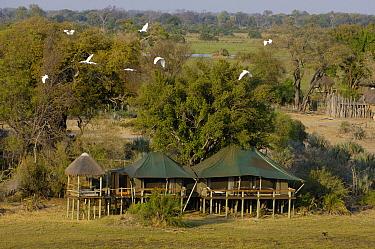 Mombo Camp in the Moremi Game Reserve, Okavango Delta, Botswana  -  Pete Oxford