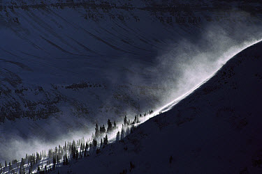 Wind-blown snow, Rocky Mountain in winter, North America  -  Sumio Harada