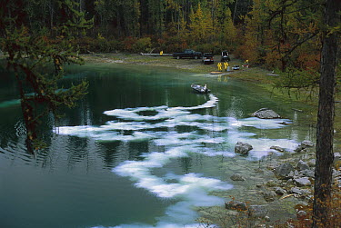 Fish pesticide released in Blue Lake to remove unwanted fish while restocking trout to improve angling conditions, northwest Montana  -  Sumio Harada
