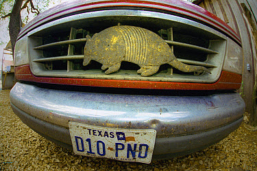 Nine-banded Armadillo (Dasypus novemcinctus) ornament on grill of truck owned by armadillo expert Sam Lewis also known as Jalapeno Sam, Luckenbach, Texas  -  Heidi & Hans-Juergen Koch