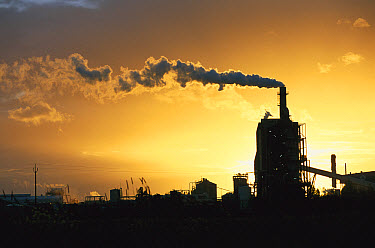 Kimberley Clark paper pulp mill factory chimneys exuding smoke, Mt Gambier, South Australia  -  Davo Blair/ Auscape