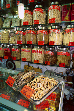 Dried Seahorses and Pipefish among other dried marine products in a traditional Chinese medicine shop, China  -  Mark Spencer/ Auscape