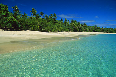 Tropical beach lined with palm trees, Uoleva Island, one of thirty-six islands in the Ha'apai Group, Tonga, South Pacific  -  Jean-Marc La Roque/ Auscape