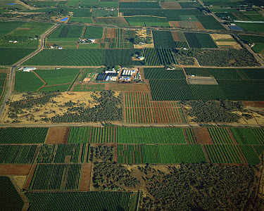 Aerial view of the Murray River irrigation area, Mildura, Victoria, Australia  -  Jean-Marc La Roque/ Auscape