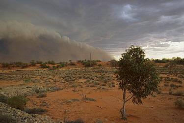 Dust storm rolling across desert, Olympic Dam, South Australia  -  Davo Blair/ Auscape