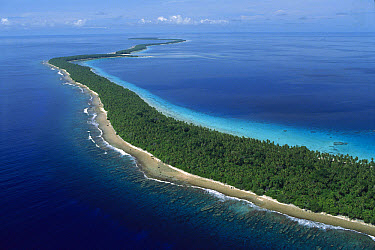 Ant atoll aerial showing white sand beaches and coconut palm trees, southwest of Pohnpei, Micronesia  -  Jean-Marc La Roque/ Auscape
