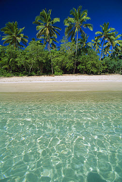 Tropical scene with palm trees, Uoleva Island, Ha'apai Group, Tonga  -  Jean-Marc La Roque/ Auscape