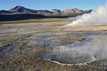 Geysers, powerful spurts of steam burst through blowholes, near San Pedro de Atacama, Atacama Desert, northern Chile  -  Marianne Porteners/ Auscape