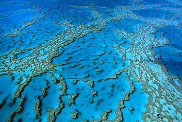 Aerial view of coral formations in Hardy Reef, Great Barrier Reef, Queensland, Australia  -  Jean-Paul Ferrero/ Auscape