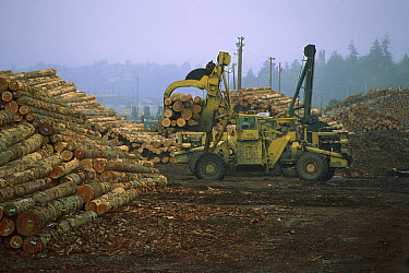 Log loading and moving in the Mensha Log Yard, Bend, Oregon  -  Davo Blair/ Auscape