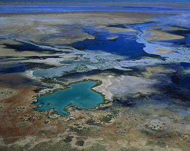 Lake McLeod, salt lake with mineral-laden artesian water surfacing on lake's edge, Western Australia  -  Jean-Paul Ferrero/ Auscape